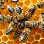 api-alveare-2